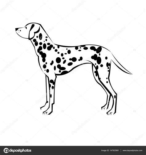 dalmatian dog drawing  getdrawings