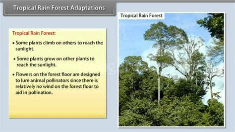 Tropical Rain Forest Adaptations YouTube