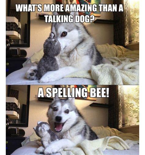 Pun Dog Meme - pun husky memes image memes at relatably com