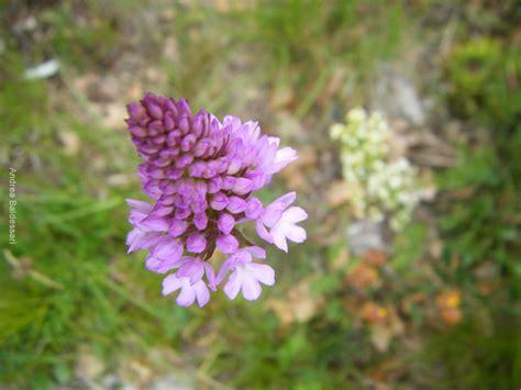 fiori selvatici viola le avventure della fantasia i fiori selvatici