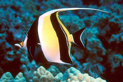top   beautiful  colorful fish
