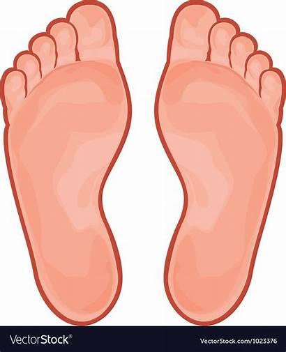 Foot Vector Feet Clipart Vectorstock Cartoon Teach