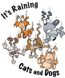 raining cats and dogs it s raining cats and dogs metaphors simile