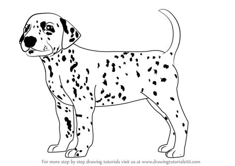 learn   draw  dalmatian dog dogs step  step