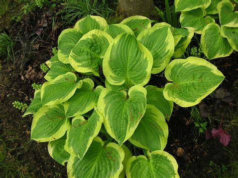 green plants for garden emerald green plants that bloomin garden
