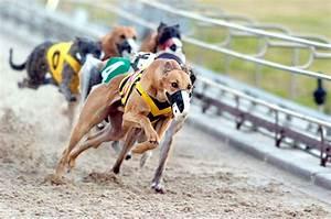 Greyhounds racing, Belle Vue Greyhound Stadium, Manchester ...