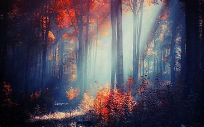 Desktop Computer Autumn Forest Wallpapers Explore Neer