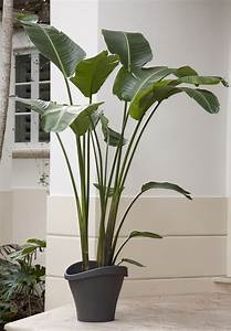 Tall, House, Plants, For, Indoor, The, Most, Recommended, Ones, U2013, Homesfeed