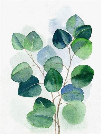 Eucalyptus Watercolor Leaves Printable Painting Plants Botanical
