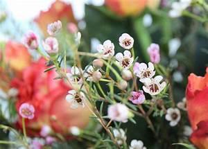 Blumen Zu Weihnachten : warum nicht auch mal blumen zu weihnachten ~ Eleganceandgraceweddings.com Haus und Dekorationen