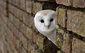 Birds  Animals  Owl  Bricks Wallpapers Hd    Desktop And