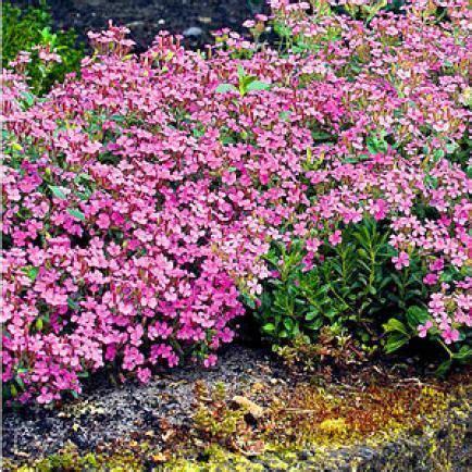 bodendecker gegen unkraut bodendecker vinca minor im garten pflanzen und pflegen bodendecker