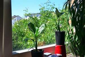 Palmen Für Drinnen : palmen f r die terrasse seite 2 palmen ~ Michelbontemps.com Haus und Dekorationen
