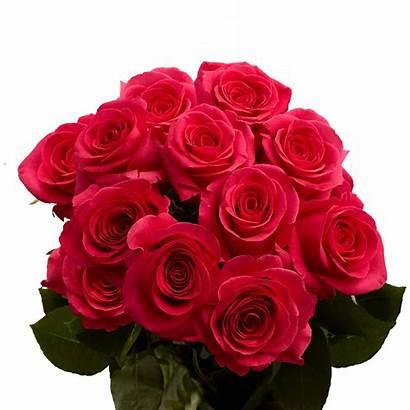 Pink Roses Dozen Stems Special Globalrose