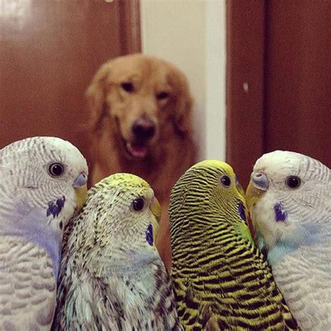 Neparastā draudzība: suns, astoņi putni un kāmis - Puaro.lv