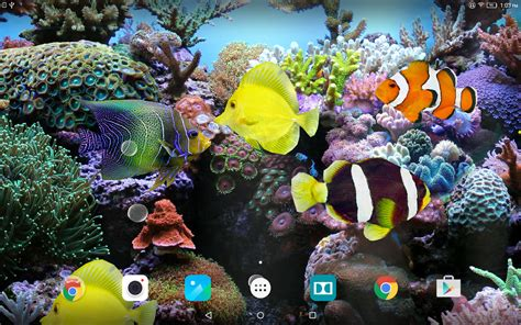 3d Animated Fish Wallpaper - coral fish 3d live wallpaper android apps on play