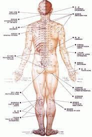meridien du corps humain les m 233 ridiens