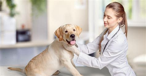 Pumpkin pet insurance policies are based on a smart level of coverage. What You Need to Know About Pet Insurance | A good pet Read Now!