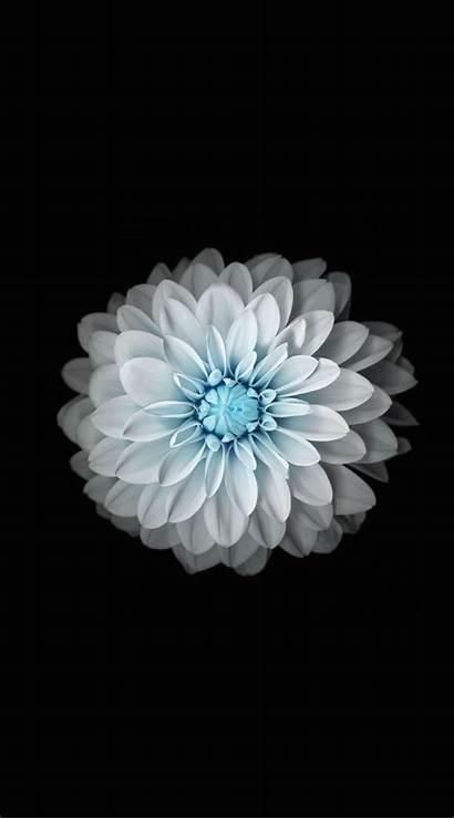 Iphone Flower Bunga Sc Flowers Hitam Iphone7plus