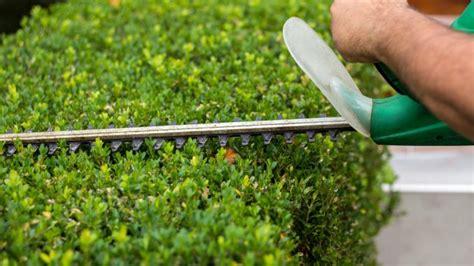 wann dürfen hecken geschnitten werden hecke schneiden wann ist brutzeit vogelschutz hauskauf wissen de
