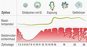Eisprung Nach Ausschabung Berechnen : nat rliche familienplanung der weibliche zyklus ~ Themetempest.com Abrechnung