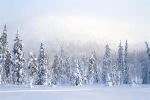 Snowy forest | Flickr - Photo Sharing!