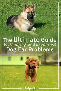 The Ultimate Guide To Annoying  U0026 Expensive Dog Ear