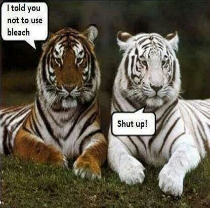 Tiger Meme - funny tiger memes pictures to pin on pinterest pinsdaddy