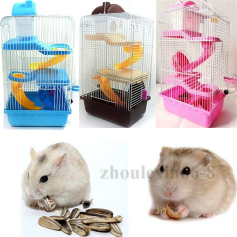 hamster picture   jpg hamster picture