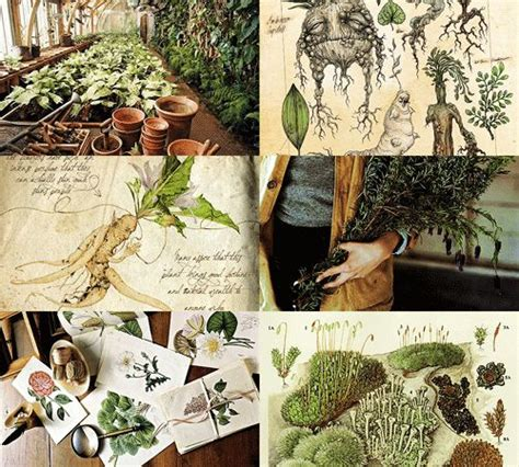 herbology plants hogwarts subjects herbology 1 2 herbology is the study of magical and mundane plants and