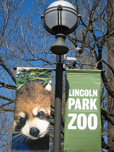 red panda banner lincoln park zoo chicago imga