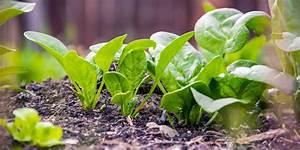 Que Planter En Juin : que planter en mars au potager fiches pratiques du jardin ~ Melissatoandfro.com Idées de Décoration