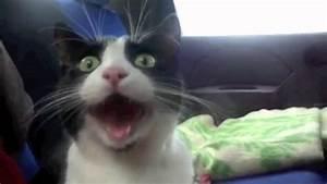 Top 25 Funniest... Funny Cat Videos