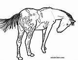 Horse Coloring Pages Appaloosa Pinto Wagon Train Spotted Trail Pony Gypsy Drawing Vanner Oregon Printable Getcolorings Getdrawings Pick Ponies Colorings sketch template