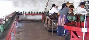 Potting Machines