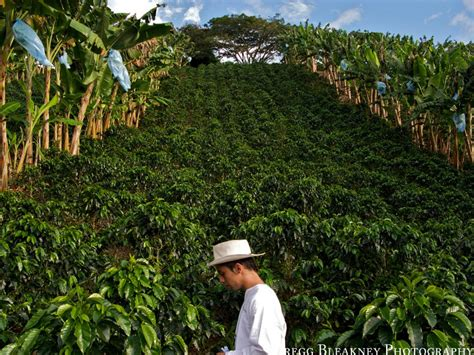 Coffee Farm In Colombia- Colombian Coffee Has Always Been Italian Coffee Maker Dishwasher Tutorial Explosion Best Quality Instant Uk Pot Stovetop Own Brand For Travel Sainsbury's