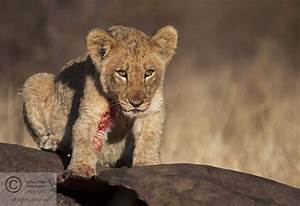12 Adorable Baby Animals In South Africa