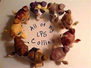 All Of My LPS Collies Updated YouTube