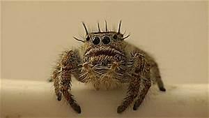 Faire Fuir Les Araignées : 10 probl mes que tous les tudiants qui ont peur des araign es comprennent ~ Melissatoandfro.com Idées de Décoration