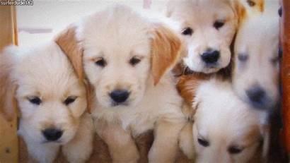 Puppy Piles Week Dog Through Second Pile