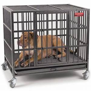 Proselect empire dog crate review dogs recommend for Best price on dog crates