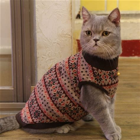 cat sweaters for cats catspia tammy cat sweater brown