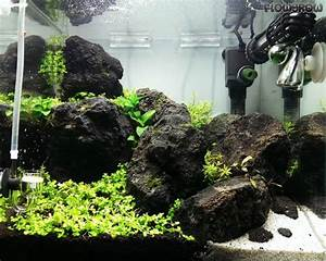 Co2 Rechner Aquarium : green between flowgrow aquascape aquarium database ~ Orissabook.com Haus und Dekorationen