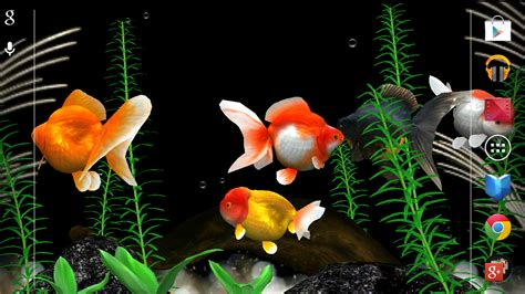 gold fish   wallpaper android apps  google play