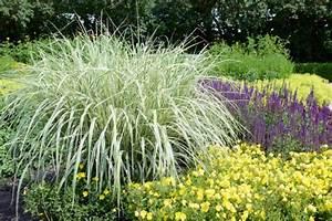 Lavendel Im Topf überwintern : nachtkerze pflanzen pflegen vermehren und mehr ~ Frokenaadalensverden.com Haus und Dekorationen