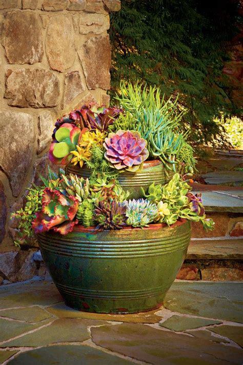 1100 best images about succulents cacti air plants on