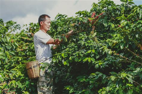 View location, address, reviews and opening hours. Starbucks Deepens its Commitment in Yunnan
