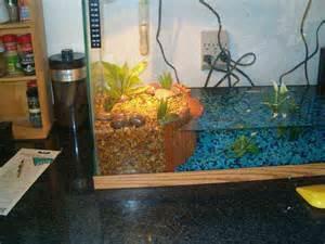 Baby Turtle Tank Setup