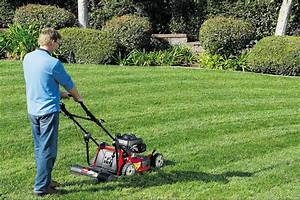 2019 Best Lawn Mower Reviews