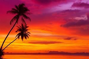 palm trees tropical beach beautiful red sky ocean nature ...
